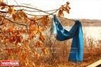 """Согласно обычаю людей Тувы """"связывание полотнищa нa веткe дерева или в священном месте принесет удачу. Фото: Чан Хьеу"""