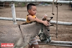 Foals, hinnies and mules are used for shy children as their first contact with horses. Photo: Cong Dat