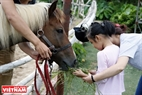 Children are bashful but like feeding the horses very much. Photo: Hoang Quang Ha