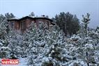 Một ngôi biệt thự giữa đồi thông và tuyết.