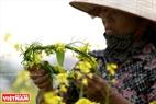 菜の花で作られた花輪。撮影:コン・ダット