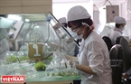 Implanting tissues into nutritious and pasteurized bags at Rung Hoa Biotechnology Joint-stock Company's lab.