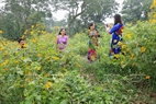 On weekends, many young people go to the place to take photographs of wild sunflowers. Photo: Viet Cuong