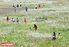 Bãi cỏ lau đẹp và thơ mộng trên một bãi đất trống của khu đô thị Linh Đàm (Hà Nội).