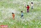 Các em nhỏ vô tư nô đùa trên cánh đồng cỏ lau.