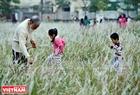 Các cháu nhỏ cũng tỏ ra thích thú khi theo ông bà, bố mẹ đến cánh đồng cỏ.