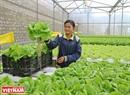 Rau thuỷ canh được trồng cách ly với bên ngoài và không sử dụng thuốc Bảo vệ thực vật nên rất an toàn cho người sử dụng.