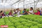 Chuyên gia và nông dân các nước ASEAN tham quan, học hỏi mô hình trồng rau thuỷ canh tại trang trại Phong Thuý (huyện Đức Trọng, Lâm Đồng).