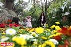 Du khách thích thú dạo chơi giữa vườn hoa xuân rực rỡ.