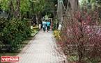 Đào quất khoe sắc thắm giữa vườn hoa xuân Ecopark.