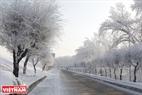 Hàng cây hai bên đường dẫn lên cầu bị bao phủ bởi băng tuyết. Ảnh: Trần Hiếu