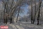 Những hàng cây bị băng tuyết phủ trắng xóa. Ảnh: Trần Hiếu