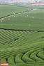 Những cánh đồng chè xanh ngắt trên cao nguyên Mộc Châu trong những ngày tháng 4.