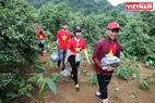 Le touriste  cueille lui -même des prunes dans le jardin de pruniers de Mme Giang Thi Sua au village de Pa Khen et puis les achète.