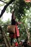 Une jeune fille H'mông au bourg Nông Truong fait une démonstration de cueillette de prunes