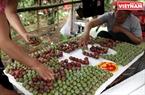 L'équipe de Pa Khen et son plateau de prunes.