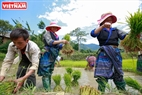 The Mong people begin a new crop. Photo: Viet Cuong/VNP