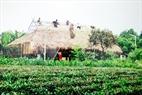 Ngôi nhà sàn truyền thống của người Khơ Mú được bà con dân tộc Khơ Mú ở huyện Mường Ảng, Điện Biên xây dựng tại Làng Văn Hóa – Du lịch các dân tộc Việt Nam ( Đồng Mô - Sơn Tây - Hà Nội)