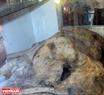 Một bộ di cốt của Ông Nam Hải tại Lăng.