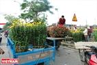Chợ hoa Tết ở Phu Văn Lâu chiều 30 Tết nhộn nhịp kẻ bán người mua.