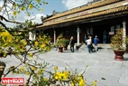 Du khách nước ngoài khám phá mùa xuân xứ Huế trong chốn cung vàng điện ngọc ở Hoàng thành Huế.