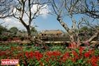 Điện Thái Hòa mờ xa sau bóng hoa xuân và hàng đại già trăm tuổi.