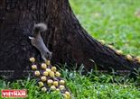 다오단(Tao Đàn)공원에서  다람쥐 먹이를 주는 사람