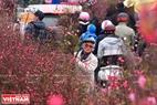 Hoa đào Phú Thượng còn được bày bán tại chợ hoa Tây Hồ.