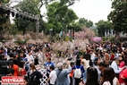 桜に関心のある多くのハノイの人民立ちと外国人。