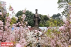 また、ここで紹介された30本の桜、一万本の桜の枝は日本から運ばれた。