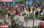 Lễ hội hoa hồng Bulgaria và Bạn bè 2018 khai mạc vào đúng ngày Quốc tế Phụ nữ mùng 8/3 đã thu hút rất đông du khách tới tham quan và khám phá những loài hoa hồng độc, lạ.