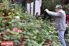 Lễ hội cũng có những cụ già tới khám phá những loài hoa hồng mới.