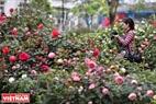 Один молодой человек с удовольствием фотографирует в саду розы.