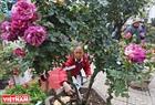Trong suốt những ngày diễn ra Lễ hội, sẽ có người tham gia chăm sóc và tỉa hoa để đảm bảo hoa luôn tươi, đẹp.