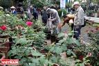 Khu vực trưng bày những giống hoa hồng nhập khẩu từ Bulgaria luôn thu hút những người sưu tầm, đam mê hoa hồng.