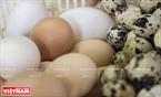 Nguyên liệu để làm ra những linh vật của các kỳ World cup là từ các loại vỏ trứng.