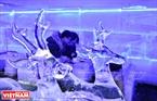 Những cặp đôi ngồi sát bên nhau trong khung cảnh lãng mạn của không gian cafe băng.