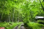 Những khu rừng phong ở Canada được chăm sóc và bảo vệ nghiêm ngặt.