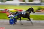Ngoài ra, du khách hãy đến với trường đua ngựa ở Quebec để khám phá môn thể thao cưỡi ngựa nổi tiếng.