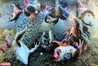 Những con ếch với cặp đùi bị cắt đứt với trứng ếch bao quanh đang cố gắng trồi lên mặt nước, sau khi bị ném trở lại xuống nước tại Romania.