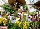 Những cây Hoa phong lan được sắp đặt khéo léo giữa khu vực đường hoa và trở thành một điểm dừng chân lý tưởng cho những người yêu thích loài hoa của núi rừng.
