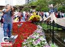 Đường hoa Nguyễn Huệ 2019 diễn ra đã thu hút hàng nghìn người đến thưởng lãm và du xuân những ngày đầu năm.