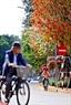 Nếu đã từng sống ở Hà Nội, bắt gặp mùa thay lá, bạn sẽ chẳng thể quên được vẻ nên thơ của những tán lá vàng trong thời khắc chuyển giao này. Ảnh: Công Đạt