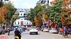Hàng cây lộc vừng đỏ rực dọc tuyến phố Đinh Tiên Hoàng (Hà Nội). Ảnh: Công Đạt