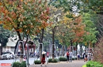 Vào mùa cây thay lá (khoảng tháng 3 dương lịch hàng năm), du khách khi đến Hà Nội ai cũng ngỡ ngàng khi chứng kiến vẻ đẹp đầy sắc màu của các loài cây đang thay lá. Ảnh: Công Đạt