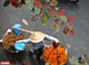 Những chiếc lá vàng như dẫn bước cho các chị gánh hàng rong. Ảnh: Công Đạt
