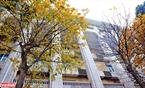 Chẳng cần phải đến một điểm nào cố định, trên khắp các con đường của Hà Nội cũng bắt gặp những cây lá úa màu. Ảnh: Công Đạt