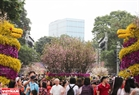 Lễ hội Hoa anh đào đã thu hút được sự quan tâm của đông đảo du khách trong và ngoài nước tới tham quan.