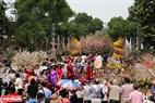Du khách chiêm ngưỡng và chụp hình cùng hoa anh đào Nhật bản.