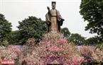 Khu vực tượng đài Lý Thái Tổ rực rỡ bởi hàng ngàn cành hoa anh đào nở rộ trong Lễ hội.